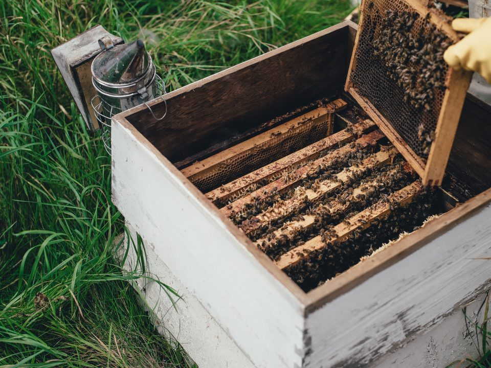 curso online apicultura